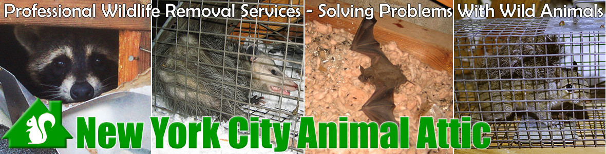 Brooklyn Animal Attic