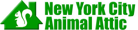 New York City Animal Attic